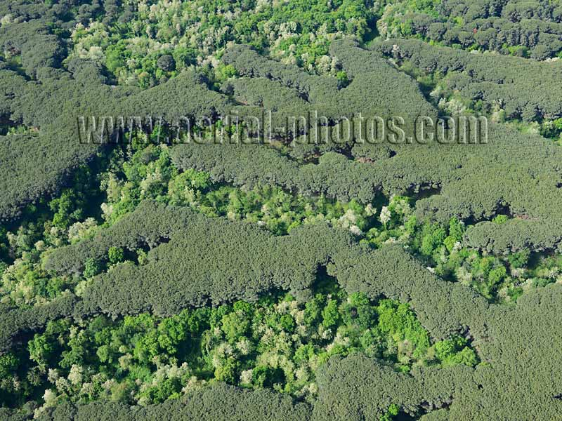 Aerial view of wooded slopes of Mount Vesuvius, Naples, Campania, Italy. VEDUTA AEREA foto, Monte Vesuvio.